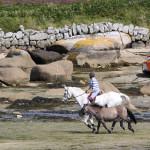Horses-Porth-Hellick-29-07-09