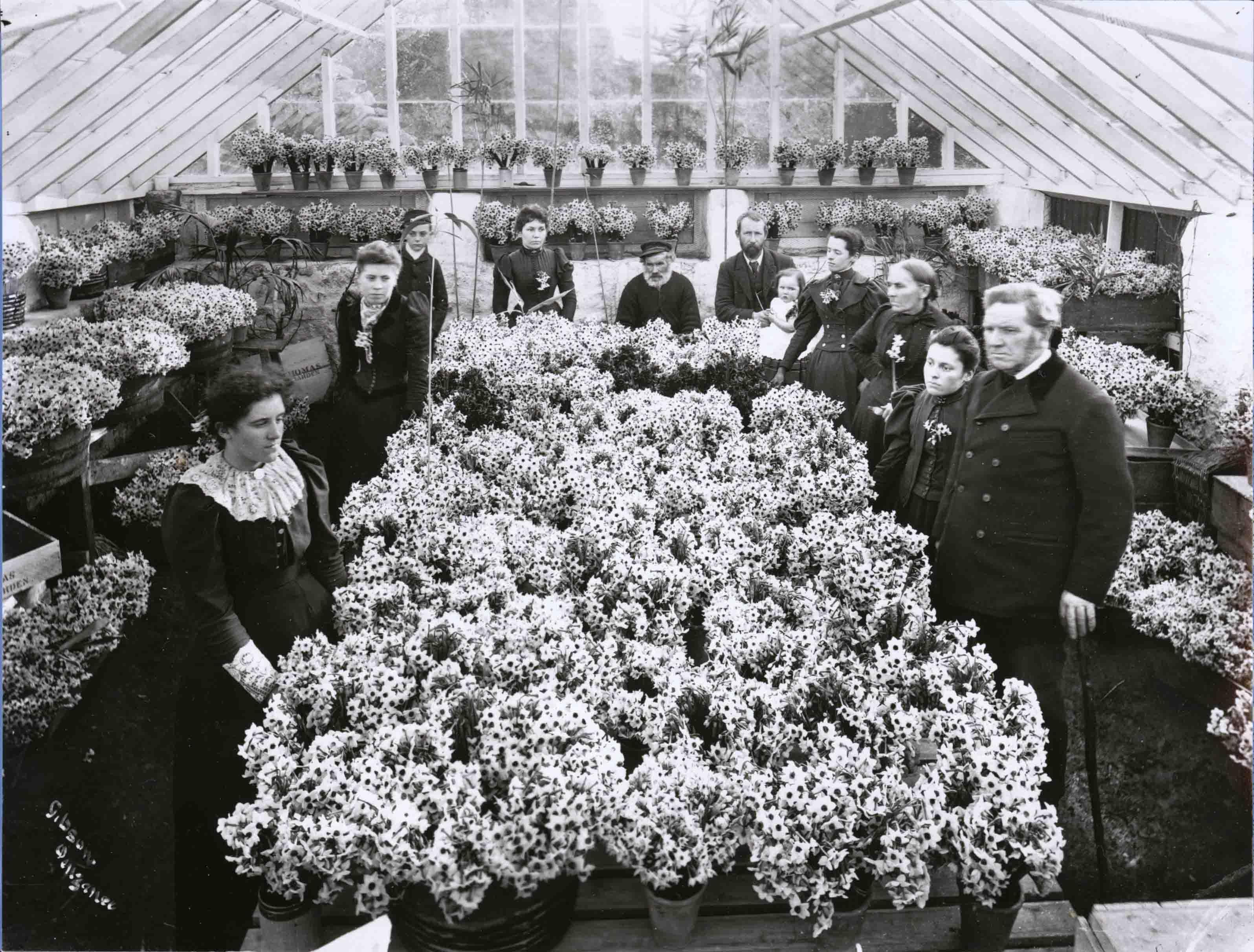 Flower industry 5