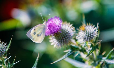 Butterfly Count & Bee Bumble - Isles of Scilly Wildlife Trust - Event
